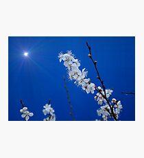 Supernova Plum Blossoms Photographic Print