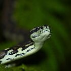 Portrait of a Jungle python by AnnaKT
