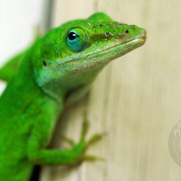 Gecko by SoulMatesPhoto