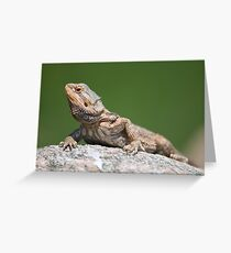 bearded dragon on a rock Greeting Card
