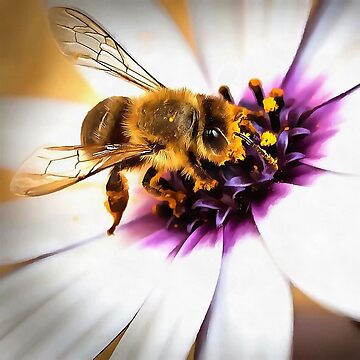 Springtime Honeybee On White African Daisy by taiche