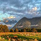 Nichts zu sehen, nur Landschaft mit Schafen in Neuseeland Südinsel Panorama von Olena Art. No. von OLena  Art ❣️