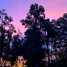 Pretty purple/pink/orange sunset sky by Mariam Kabbout