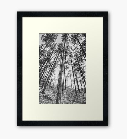 Tall and Skinny Framed Print