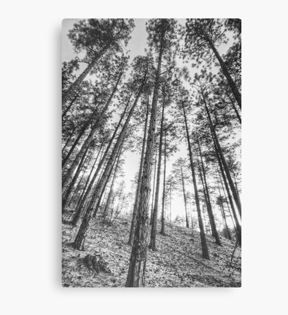 Tall and Skinny Canvas Print