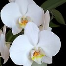 White Orchid by Martha Medford