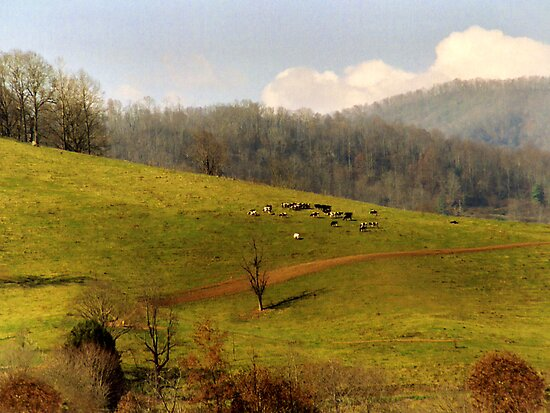 Mountain Pasture by Tibby Steedly
