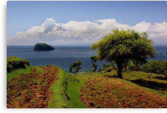 Earth Island by Bruce  Watson