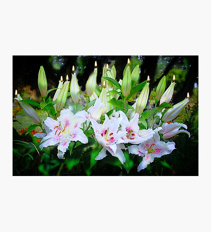 Happy 50th Birthday Lily Photographic Print