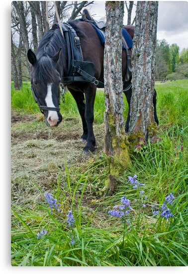 Grass is Greener and the Flowers Bluer by Bryan Peterson
