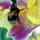 Bee. by Vitta
