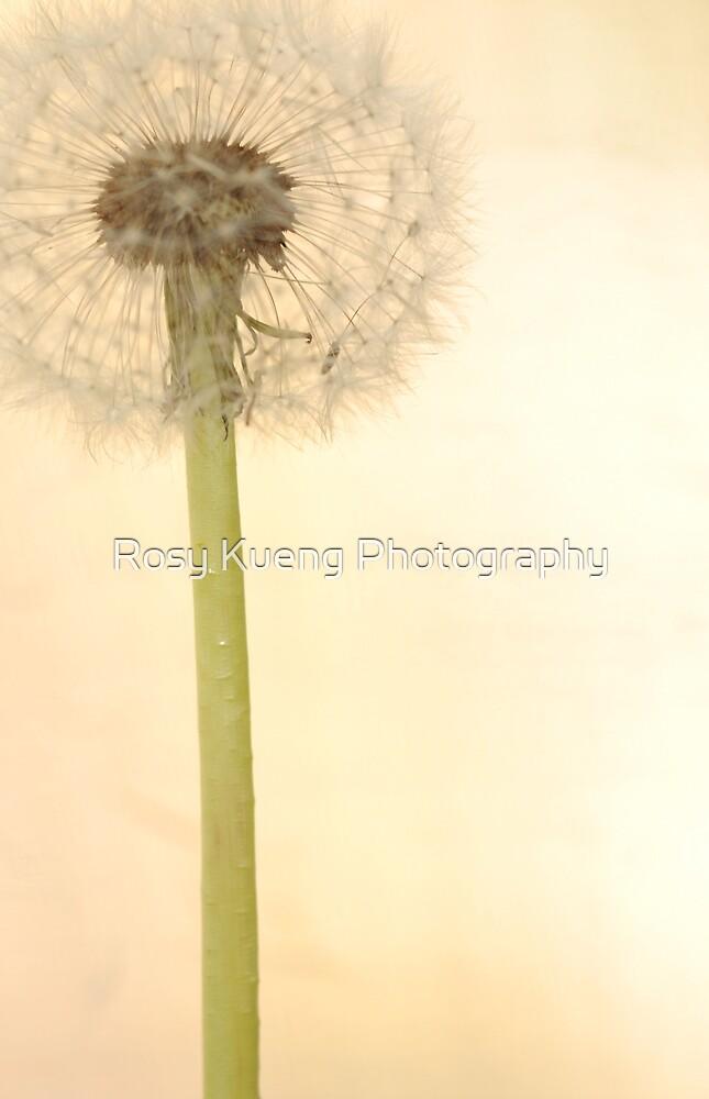 Fata Morgana by Rosy Kueng Photography