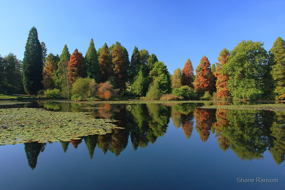 Bedgebury Pinetum during the Autumn. by Shane Ransom