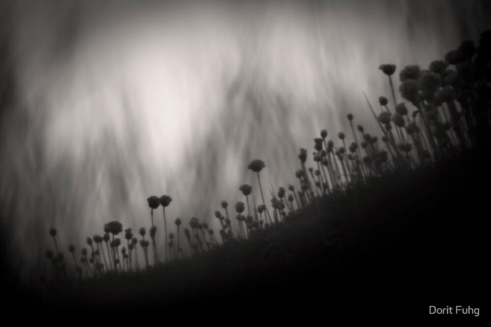 intimacy by Dorit Fuhg