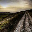 Dorset by Sam Mortimer