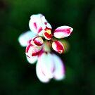 Petal Pearls by Avena Singh