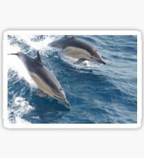 Common Dolphin Sticker