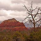Sedona, Arizona Red Rocks by Barb White
