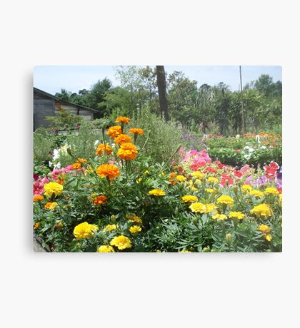 Spring at the Springfield Nursery Metal Print