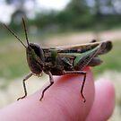my grasshopper friend. by elizabethrose05