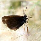Little Butterfly. by elizabethrose05