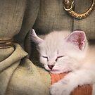 «Kitty» de Rebeca Saray