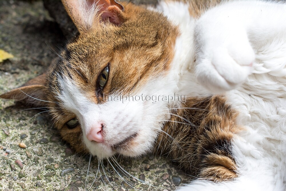 Feline Content by lmaiphotography