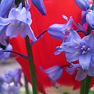 Red and Bluebell Blue by hjaynefoster