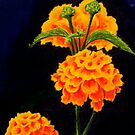 Dawn's flowers by Hilary Robinson