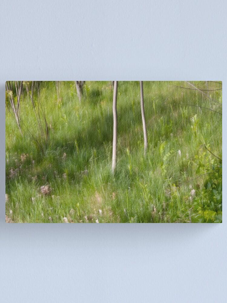 Alternate view of Saplings in Spring Canvas Print