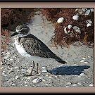 Shore Bird by glink