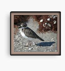 Shore Bird Canvas Print