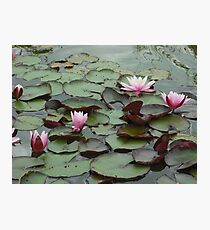 Down on the lily pad Photographic Print