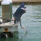 Great Blue Heron Fishing by Memaa