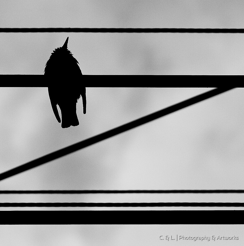OnePhotoPerDay Series: 136 by L. by C. & L. | ABBILDUNG.ro Photography