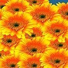 Gorgeous Yellow Orange Gerberas by hurmerinta