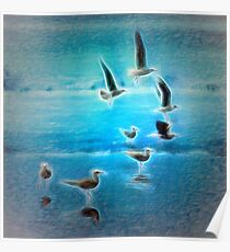 Seagulls on the beach - Choco Colombia Poster