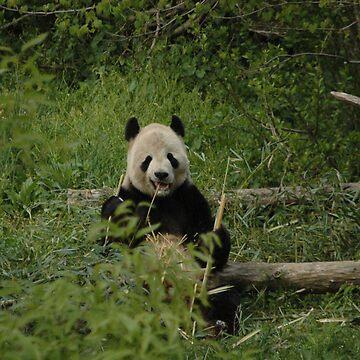 Eating panda by alexrpk