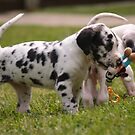 Little Great Danes by the57man