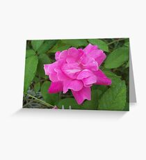 blushing beauty Greeting Card