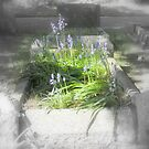 Bluebells after death. by Livvy Young