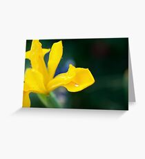 shallow depth of focus on a silvery water drop Greeting Card