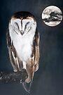 Artful Owl by Sara Sadler