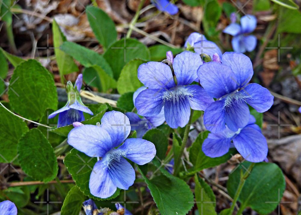 Violet Blue Nude Photos 18