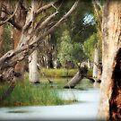 ~River Gums on the Murray~ by Lynda Heins