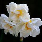 «Narciso doble de tres cabezas» de AnnDixon