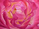 Centre of the rose ... by Michelle Cocking