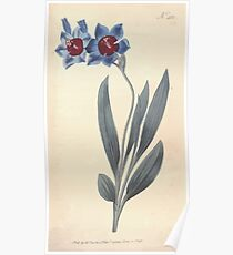The Botanical magazine, or, Flower garden displayed by William Curtis V11 V12 1797 1798 0107 Ixia Rubro Cyanea Red Blue Ixia Poster