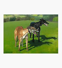 Greyhound Portrait - Oil on Canvas Photographic Print