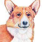 Welsh corgi - pembroke by doggyshop